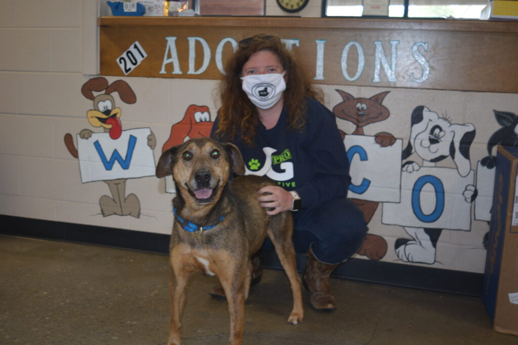 Animal Population Increases at Carroll County Animal Shelter